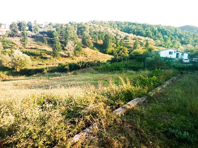 Shitet truall Tirane pranë Vilave Amerikane